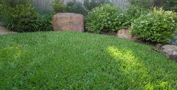 A Healthy Lawn Is Properly Watered, Fertilized U0026 Aerated.