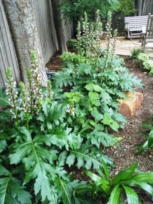 Five Favorite Perennials For Dry Shade Gardens Roundtree