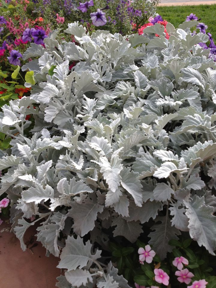 Five More Favorite Low Maintenance Plants For Texas Gardens Roundtree Landscaping Dallas Tx
